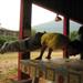 acrobatic mestre eclison